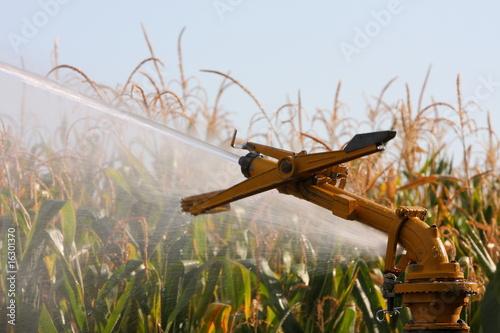 Printed kitchen splashbacks irrigazione