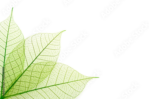 Fototapety One Color   zielone-zylki-lisci