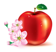 Beautiful Red Apple And Flowers On A Branch