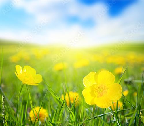 Foto-Kissen - flowers and sunny day (von Iakov Kalinin)