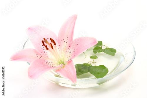 Foto op Plexiglas Magnolia Pink lily