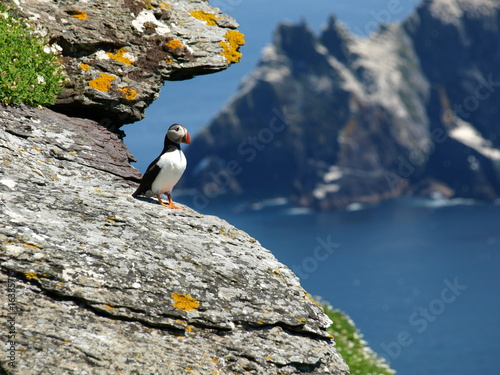 Fotomural  skellig island puffin enjoying the view
