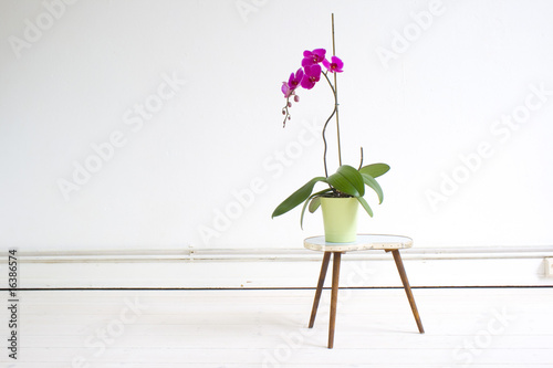 Wall Murals Orchid Orchidee im Raum