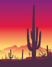 Cactus - Sunrise