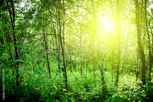 Staande foto Lente sun in deep forest