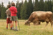 Bimbi E Mucche
