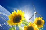 Słoneczniki i wiatrak