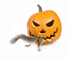 Insatiable Pumpkin