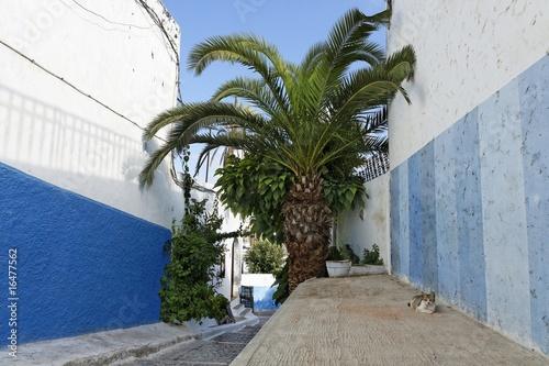 Poster de jardin Europe Méditérranéenne Chat dans les rues de la Kasbah des Oudayas à Rabat au Maroc