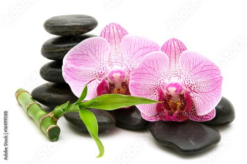 Doppelrollo mit Motiv - pink orchid, stack of stones on white background (von Andre)