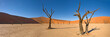 canvas print picture - desert trees