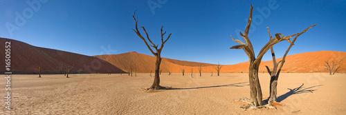 desert trees фототапет