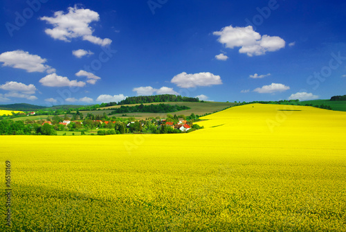 Photo Stands Yellow Rural landscape