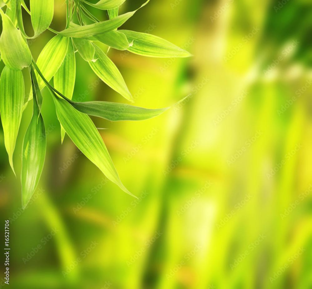 Doppelrollo mit Motiv - Green plant close-up