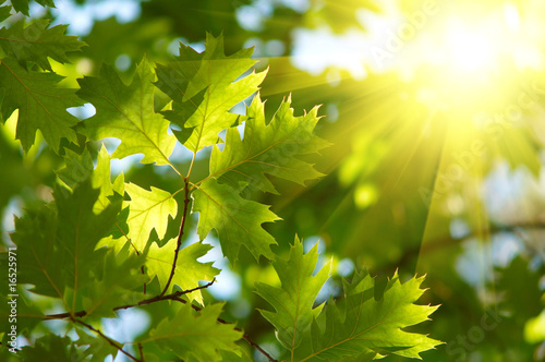 Foto-Duschvorhang - Maple leaves backgrond.