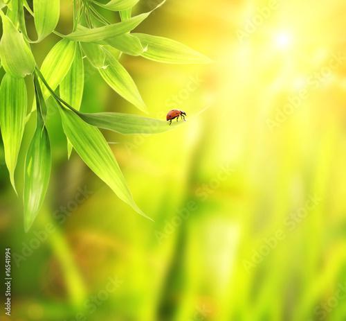 Doppelrollo mit Motiv - Ladybird sitting on a bamboo leaves (von Nejron Photo)