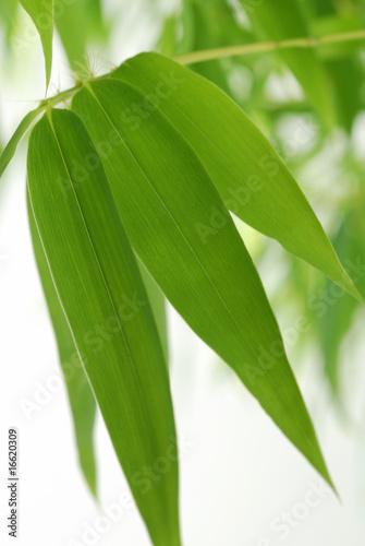 liscie-bambusa-01