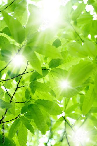 Garden Poster Spring 新緑と木漏れ日