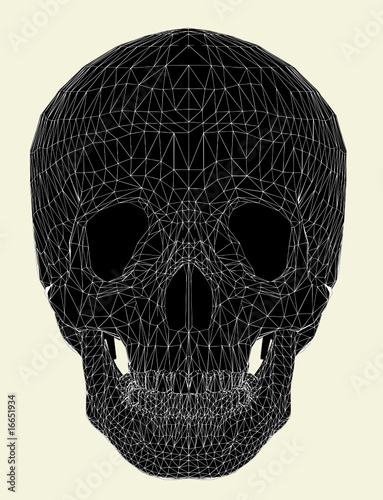 Photo  Human Skull Vector 01