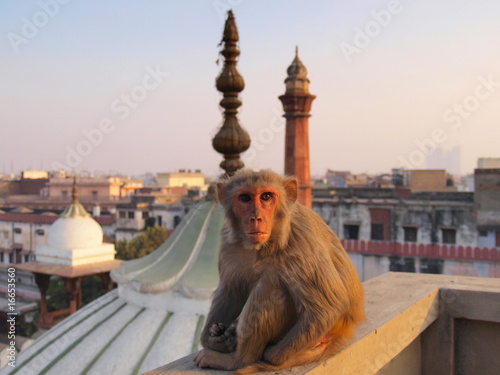Photo sur Toile Delhi New Delhi
