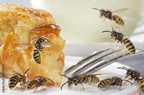 Fotografie, Obraz  Yellowjackets on the Dessert Plate 08