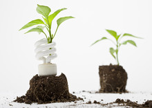 A Young Plant Sprouts Up Through An Energy Efficient Lamp