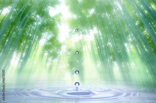 Obraz na plátne 水滴と竹林