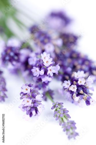 In de dag Lavendel Fleurs de lavande