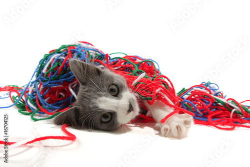 Foto auf Acrylglas Katze Kitten playing with yarn