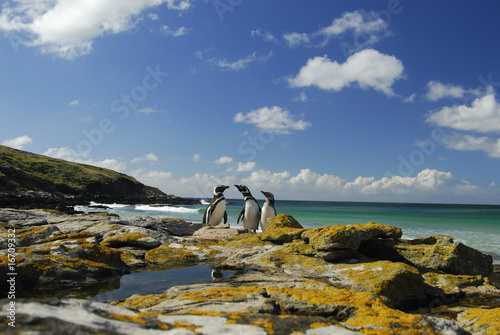Photo Stands Antarctic Magellanic penguins