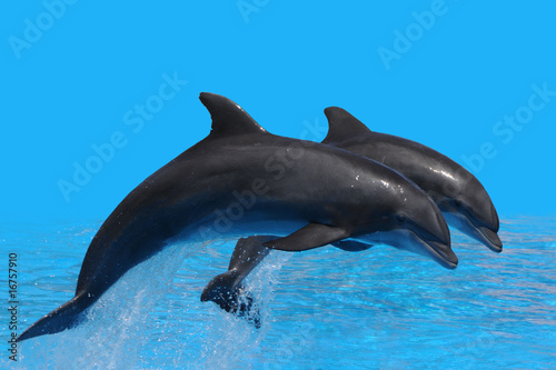 Photo Stands Dolphins Delfin