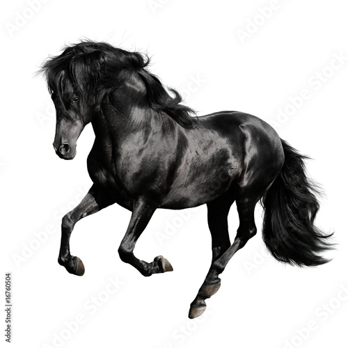 Foto black horse runs gallop isolated on white backgrond