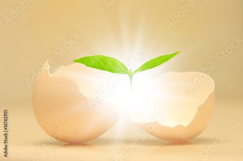 Tablou Canvas 卵と双葉