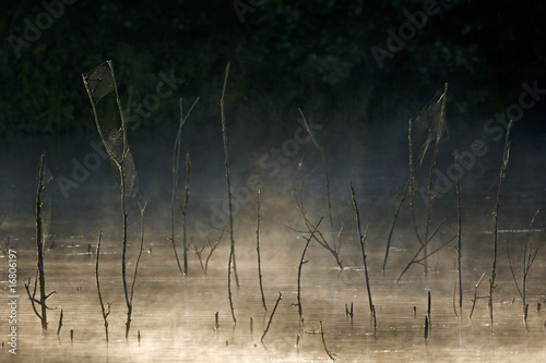 dawn in the swamp - alba in palude Fototapet