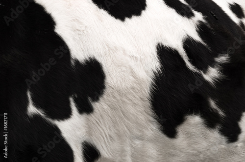 Photo sur Toile Les Textures Cow hide print