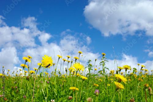 Foto op Plexiglas Landschappen Blumenwiese closeup