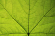 macro nature. abstract background