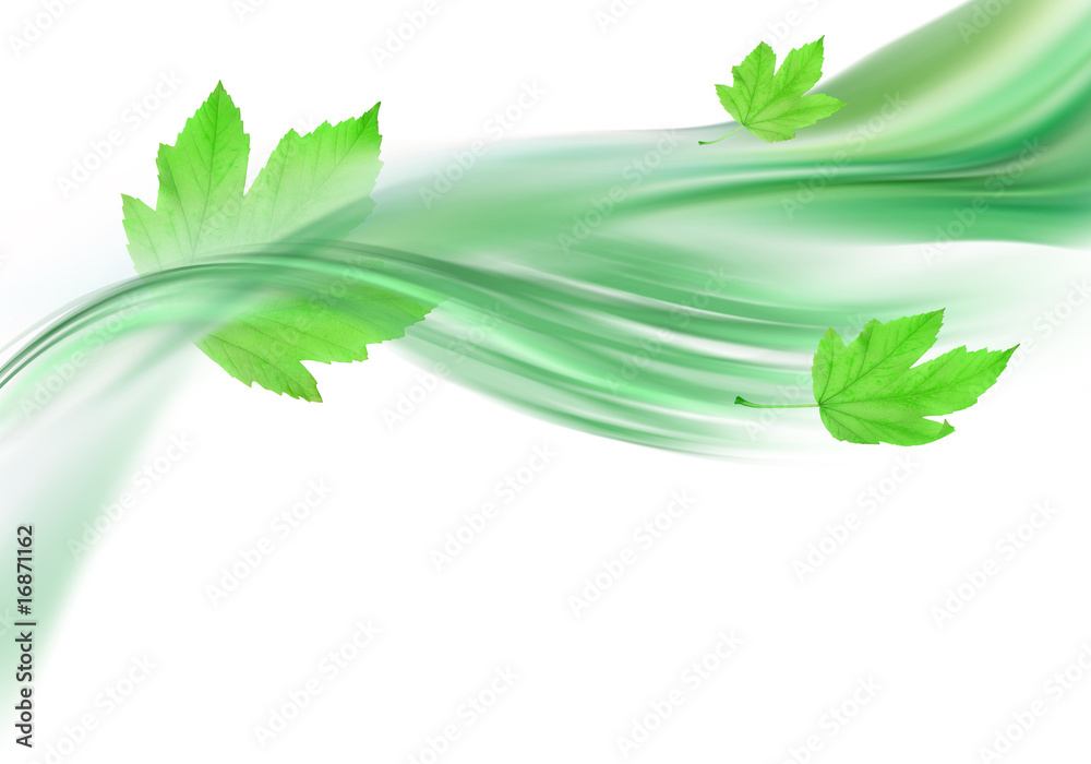 Fototapeta soft green background and leaves