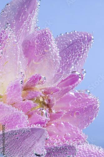 rozowy-kwiat-z-pecherzykow-powietrza