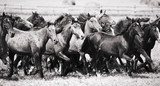 A herd of young horses - 16934338