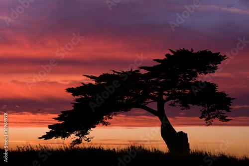 Papiers peints Grenat arbre silhouette ciel couché soleil paysage nature
