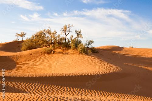 Foto op Plexiglas Marokko dunes