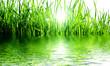 canvas print picture - Gras im Gegenlicht