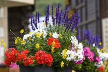 Blumen Im Blumenkasten Auf Einem Balkon
