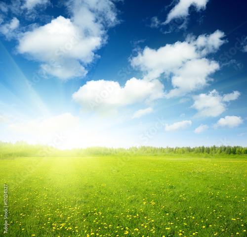 Spoed Foto op Canvas Blauwe hemel field of spring flowers and perfect sky