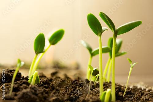New plants Canvas Print