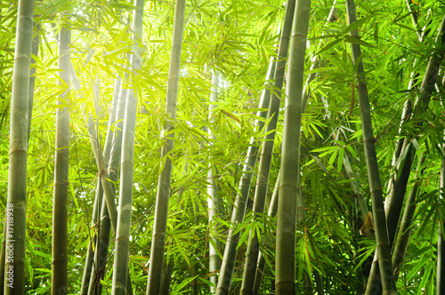 Foto auf Gartenposter Bambusse bamboo forest with ray of lights