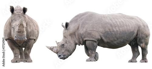 Fotografija  Rhinoceros