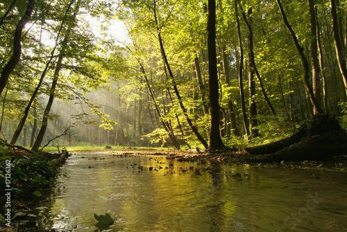Keuken foto achterwand Bossen Fog over the stream in the autumn forest