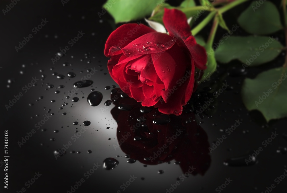 Fototapeta Red rose, on black reflecting surface